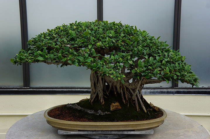 bonsai trees are currently trending as desk plants these miniature trees can add a sense of tranquillity and a touch of class to any office space bonsai tree office