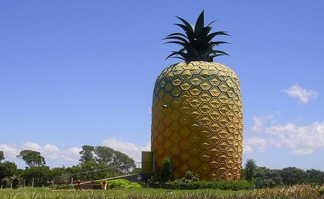 the big pineapple bathurst